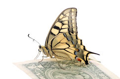 Butterfly on one dollar banknote. Butterfly Papilio Machaon on one dollar banknote over white Stock Images