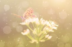 Butterfly on onion flower Royalty Free Stock Images