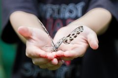 Butterfly on open hands Royalty Free Stock Photo