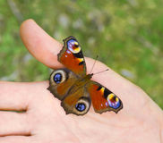 Butterfly on an open palm Stock Image