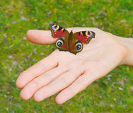 Butterfly on an open palm Royalty Free Stock Photography
