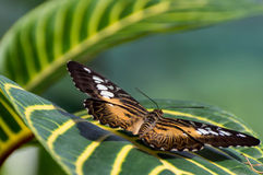 Butterfly with open wings on spring. Insect is sitting on a leaf Stock Photography