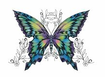 Butterfly with open wings royalty free illustration