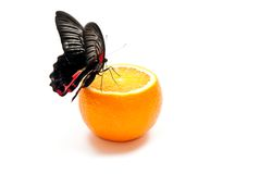 Butterfly on orange Stock Image