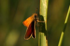 Butterfly. Orange beautiful butterfly is sitting royalty free stock images