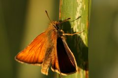 Butterfly. Orange beautiful butterfly is sitting on the meadow royalty free stock photography
