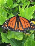 Butterfly. Orange and black butterfly stock photo