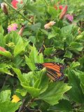 Butterfly. Orange and black butterfly royalty free stock photography