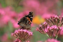 Butterfly orange black pink flower sitting Stock Photos