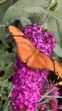 Butterfly 2. Orange butterfly on pink flower stock image