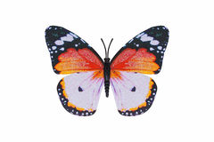 Butterfly orange color isolated white background. Royalty Free Stock Image