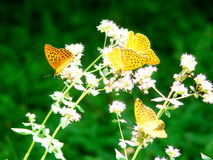 Butterfly. Orange colours, shiny days, summer days, beauty flowers, tenderness Stock Photo