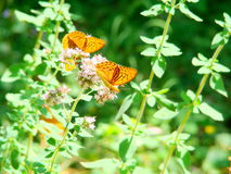 Butterfly. Orange colours, summer days, butterflies, love nectar, Beauty nature, wild nature Stock Photos