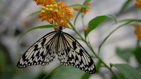 Butterfly on orange flower.  royalty free stock images