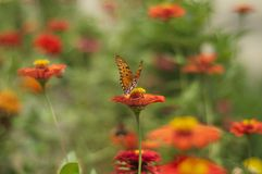 Butterfly. Orange in the flowers Stock Photos