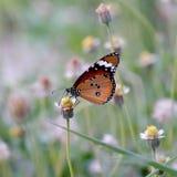 Butterfly. Orange butterfly on grass flower royalty free stock photo