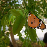 Butterfly. Orange butterfly holds on tree stock photos