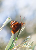 Butterfly. Orange butterfly on leaf stem stock images