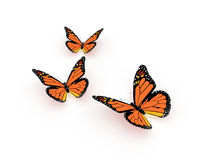 Butterfly orange render isolated Stock Photos