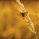 Butterfly. Orange butterfly sitting on the grass Stock Images
