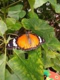 Butterfly. Orange butterfly sitting on leaf stock image