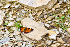 Butterfly orange on the stones Stock Photo