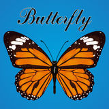 Butterfly with orange wings and space for text, view from above, isolated on blue background. Vector illustration, banner, card, p Stock Photo