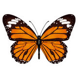 Butterfly with orange wings, view from above, isolated on white background. Vector illustration, banner, card, poster Stock Photography