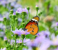 Butterfly. Orange butterfly on yellow flowers, background green leaves in the park stock images