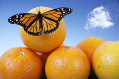 Butterfly on Oranges Royalty Free Stock Photos