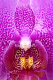 Butterfly orchid. The partial close-up of blooming butterfly orchid Royalty Free Stock Photography