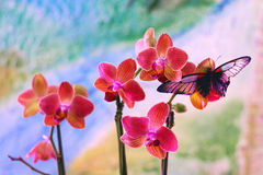 BUTTERFLY ON ORCHID. Colorful butterfly on orchid in the garden royalty free stock images