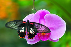 Butterfly on Orchid stock images