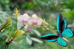 Butterfly and  orchid Royalty Free Stock Photography
