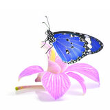 Butterfly on orchid flower Royalty Free Stock Image