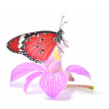 Butterfly on orchid flower royalty free stock images