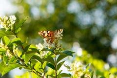 Butterfly. Orenge butterfly shot in Palmenhaus, Wien Stock Photo
