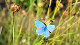 Butterfly outdoo Royalty Free Stock Photography