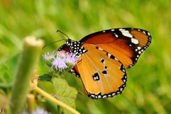 Butterfly outdoor Stock Photos