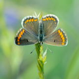 Butterfly outdoor Royalty Free Stock Photography