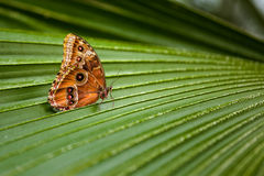 Butterfly. Outdoor on foliage plants Stock Photography