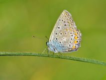 Butterfly outdoor Royalty Free Stock Images