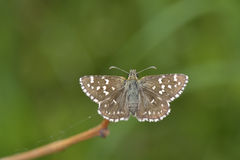 Butterfly outdoor Royalty Free Stock Image