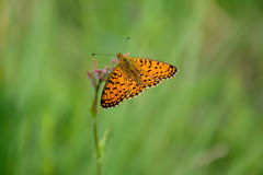 Butterfly outdoor Stock Images
