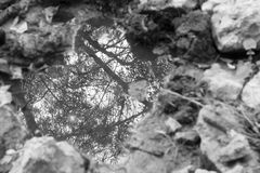 Butterfly over a puddle behind some trees. Between grey stones Royalty Free Stock Photo
