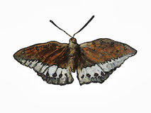 Butterfly painting Royalty Free Stock Photos