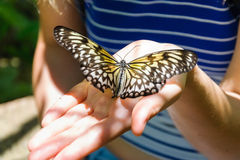 Butterfly on palm Stock Images
