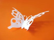 Butterfly from paper on colored background Royalty Free Stock Image