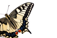 Butterfly Papilio machaon Royalty Free Stock Photos