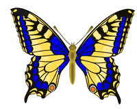 Butterfly Papilio machaon Linnaeus Stock Image